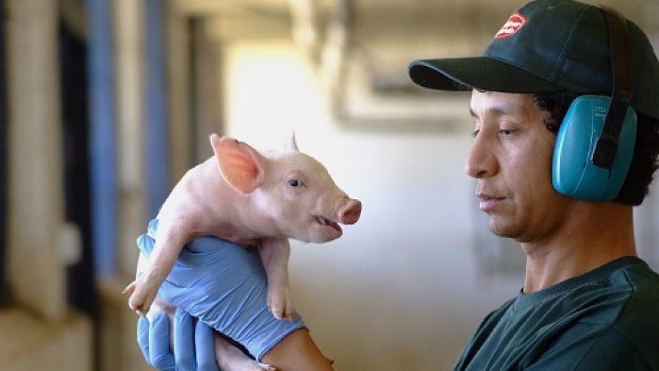 """ASPROCER y SAG realizan curso de """"Capacitación de Bienestar Animal en Producción Porcina"""""""