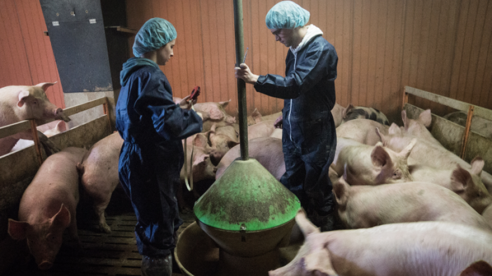 OIE: la bioseguridad es clave para contener la propagación de las enfermedades animales