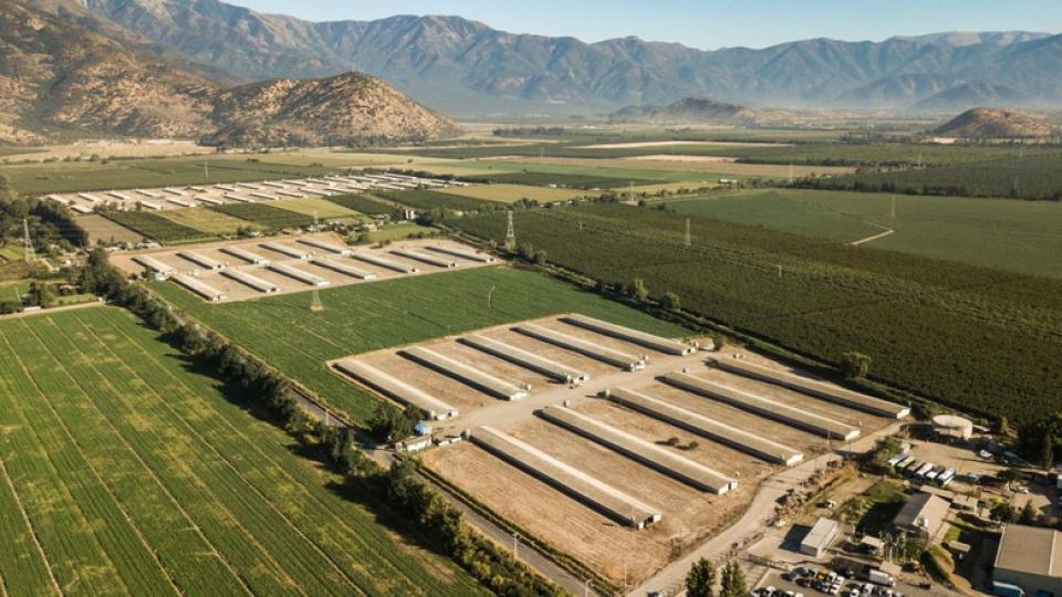 Sector porcino: En qué está tras la publicación del anteproyecto de la primera norma ambiental de olores chilena
